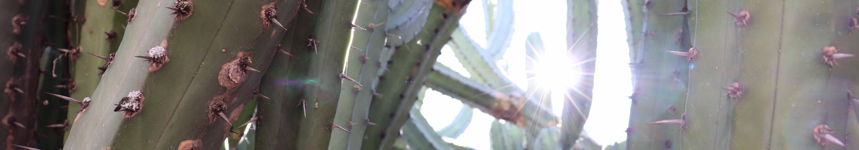 slider-photo-cactus-small