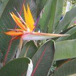 Ajijic Letter A Flora