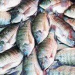 Ajijic Letter I2 Fish